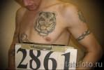 Блатная тату с оскаленным тигром или любой хищной кошкой – злость на власть и ментов