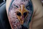 Тату орел – цветная работа на руку и плечо