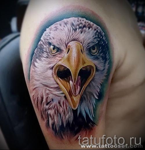 Тату орел - цветная работа на руку и плечо