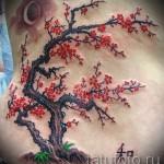 тату дерево сакуры - фото пример от 12122015 № 5