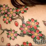 японская сакура тату - фото пример от 12122015 № 1