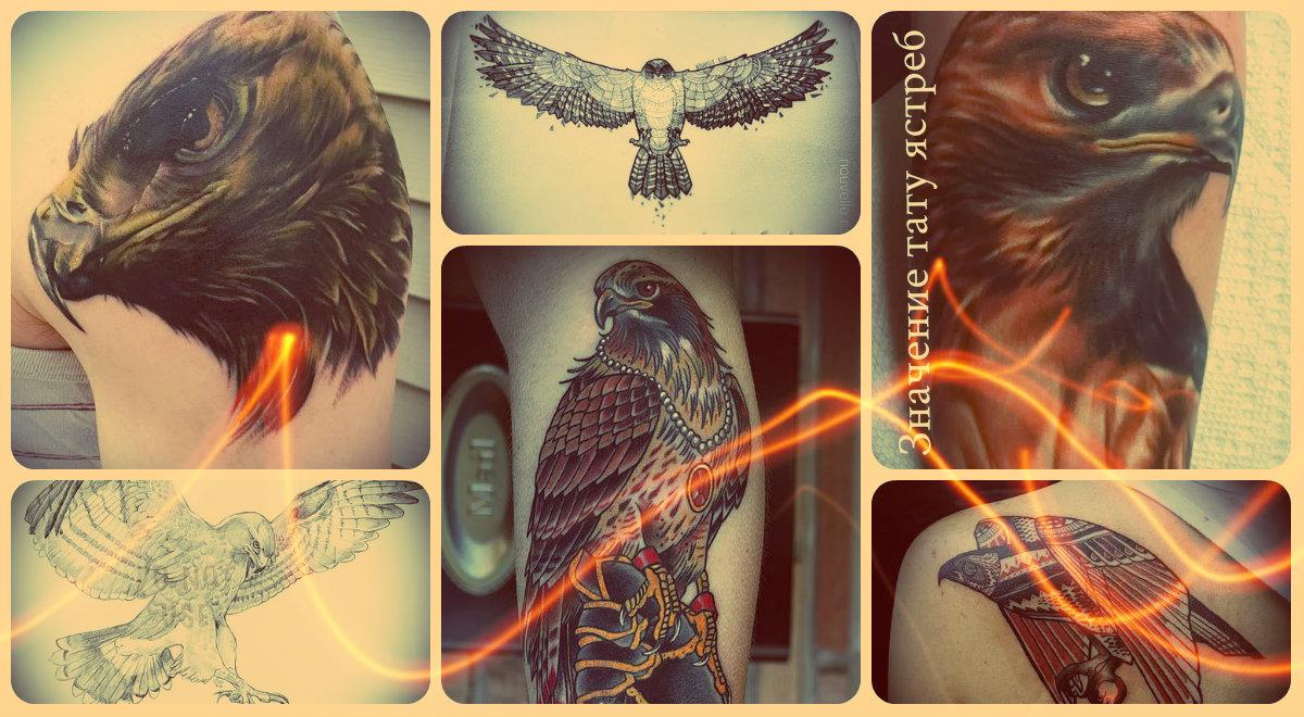 Значение тату ястреб - фото готовых татуировок
