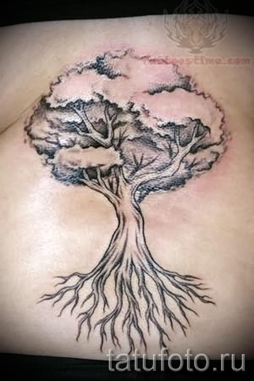 Фото тату дерево - рисункb для тату 09122015 № 052