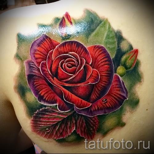 тату роза реализм - фото вариант от 15122015 № 2