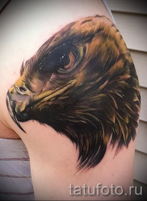 hawk tattoo - an example of the photograph of 07122015 4