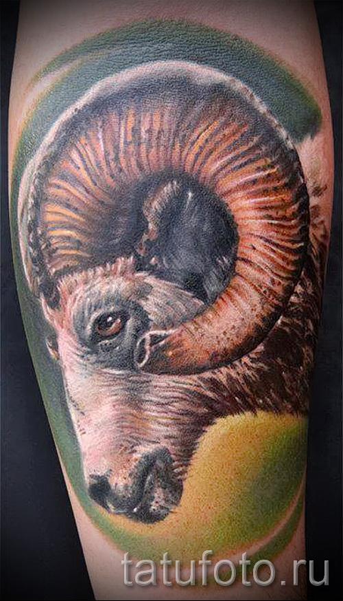 Тату козел - фото готовой татуировки от 10012016 25