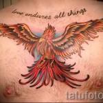 тату феникс на груди - фото готовой татуировки от 11022016 5