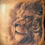 lion tatouage sur les côtes - une photo avec un tatouage sur l'exemple 03022016 2