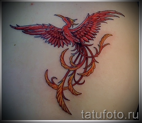 phoenix tattoo - a photo of the finished tattoo on 11022016 1