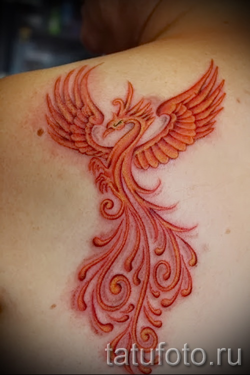 phoenix tattoo - a photo of the finished tattoo on 11022016 3