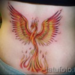 phoenix tattoo on the lower back - a photo of the finished tattoo 11022016 2