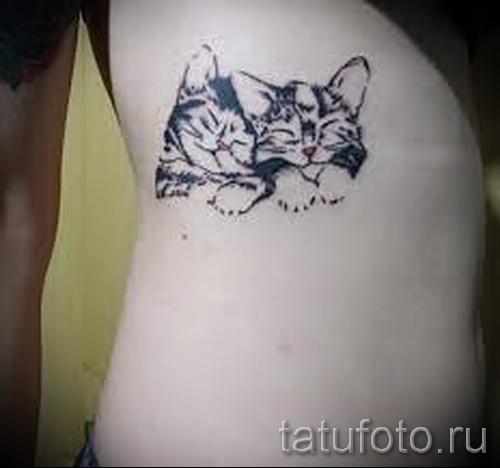 tatouage sur les bords de la cat - Photo exemple d'un tatouage sur 03022016 1