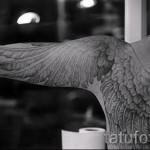 тату белые крылья - фото с вариантом готового рисунка от 29032016 1