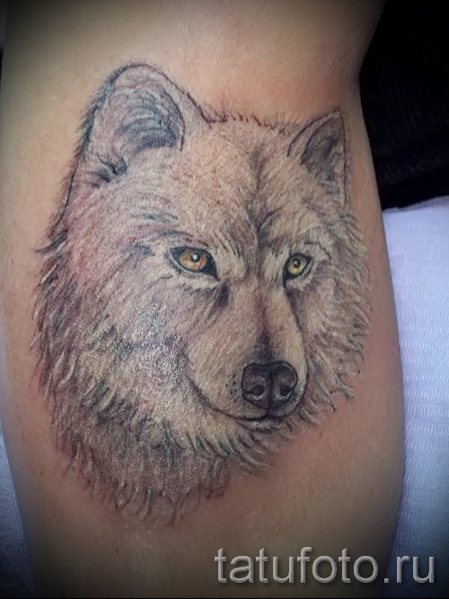 white wolf tattoo - photo with an embodiment of the finished pattern of 29032016 1