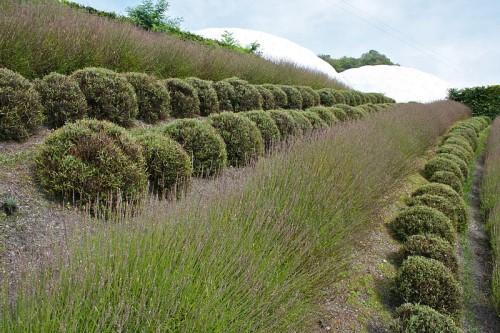 Состояние влаги в почве. Декоративное садоводство - фото