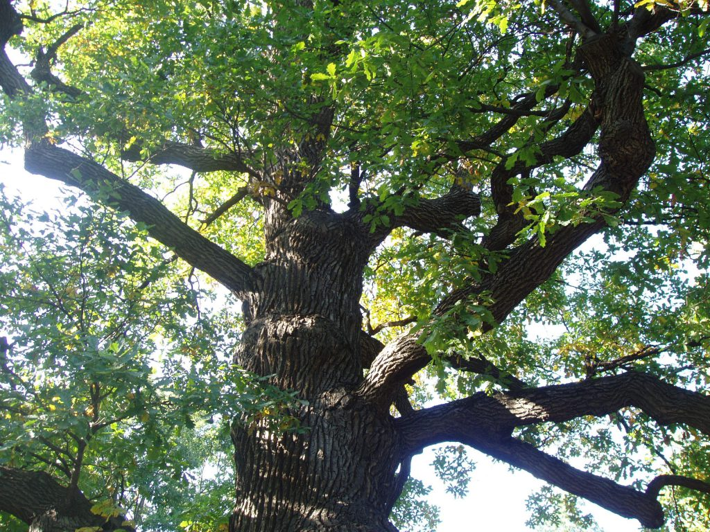 Строение стебля древесного растения. Декоративное садоводство - фото