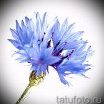 тату цветы эскизы акварель - рисунки от 26-04-2016 28