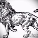 эскизы тату льва для мужчин - рисунки для татуировки от 29042916 5