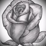 Rose tattoo black and white sketches 1