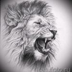 sketches of a lion tattoo on his leg - the drawings for tattoos from 29042916 3