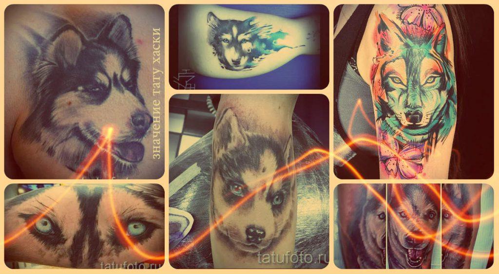 Значение тату хаски - информация и примеры классных готовых татуировок на фото