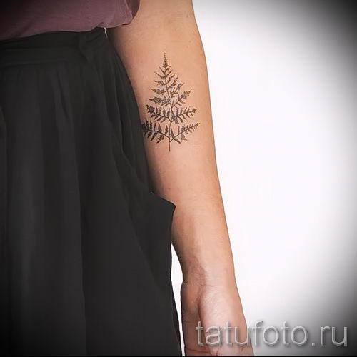 Классная тату папоротник на фото - для статьи про значение татуировки 56