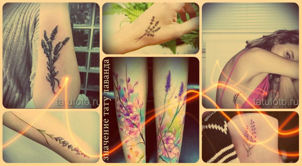 Лаванда тату значение - интересная информация о рисунке и примеры готовых тату на фото