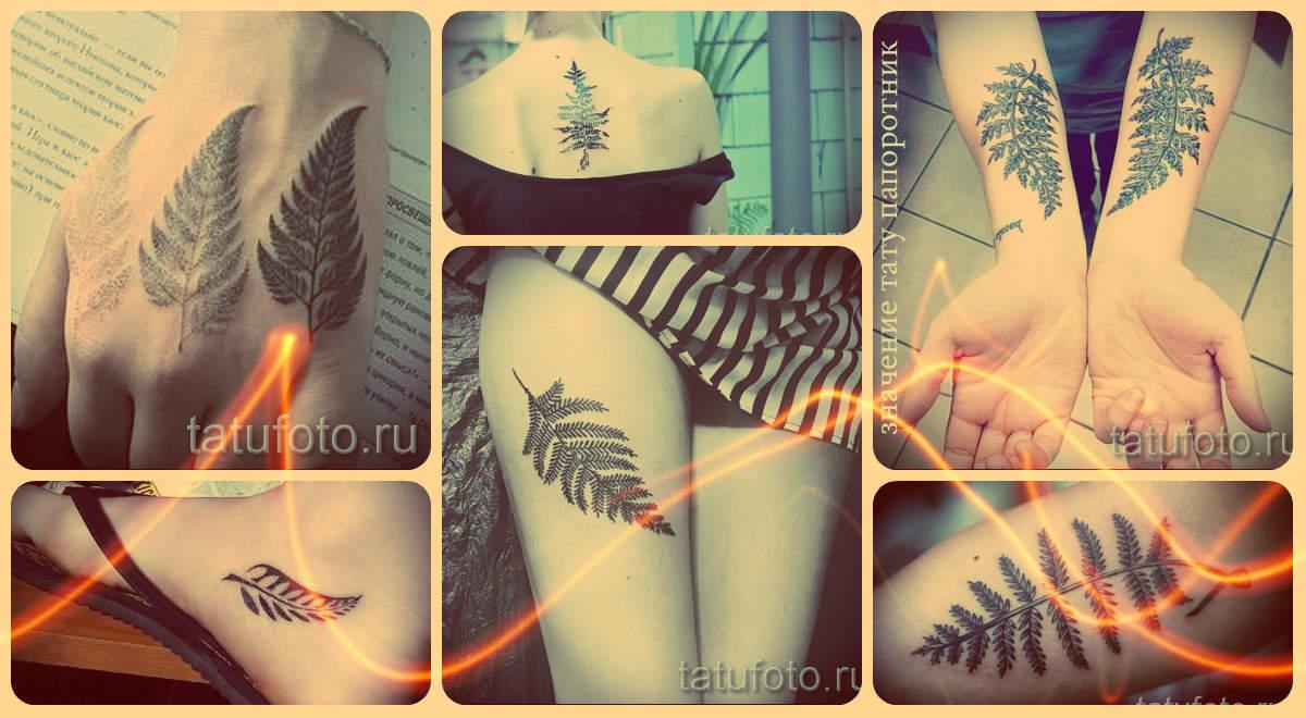 Тату папоротник значение - информация про смысл татуировки и фото классных тату