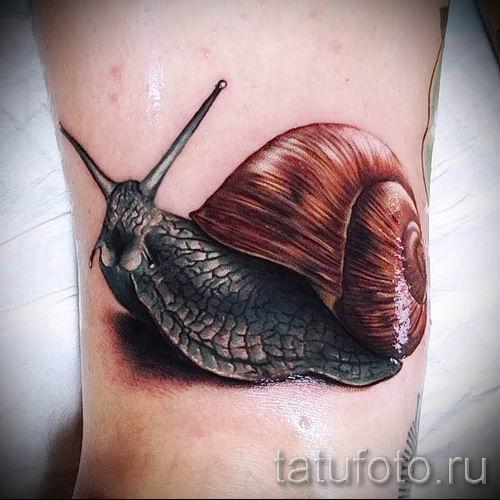 тату улитка фото - пример тату для статьи про значение татуировки - tatufoto.ru - 15