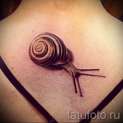 тату улитка фото - пример тату для статьи про значение татуировки - tatufoto.ru - 61