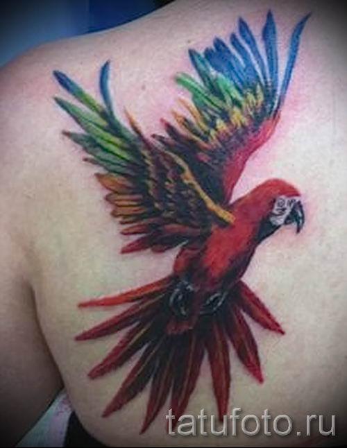 фото пример тату попугай для статьи про значение тату с попугаем - 3
