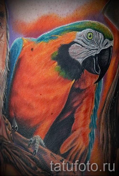 фото пример тату попугай для статьи про значение тату с попугаем - 7
