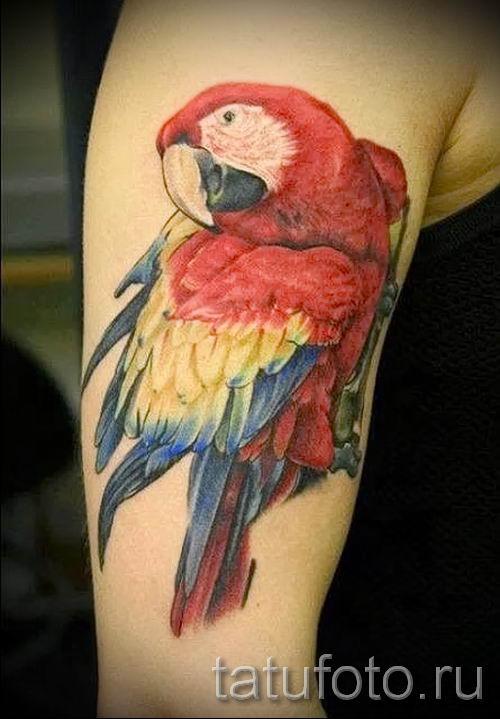фото пример тату попугай для статьи про значение тату с попугаем - 9
