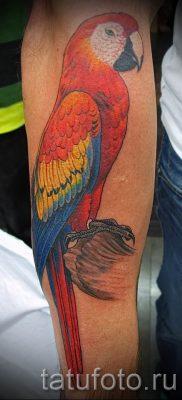 фото пример тату попугай для статьи про значение тату с попугаем – 20