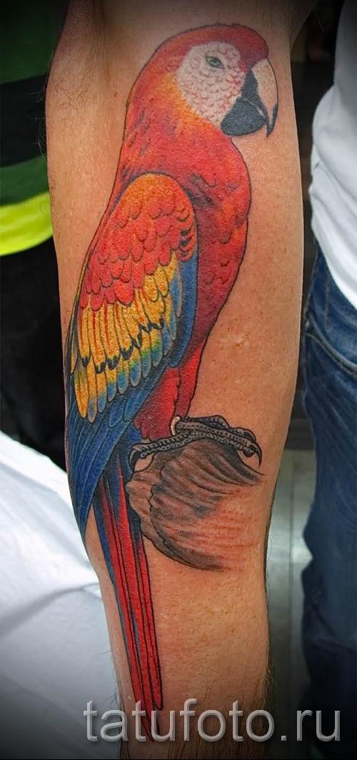 фото пример тату попугай для статьи про значение тату с попугаем - 20