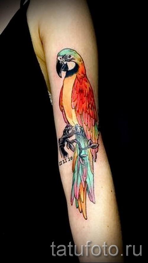 фото пример тату попугай для статьи про значение тату с попугаем - 27