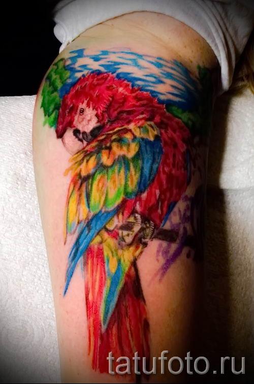 фото пример тату попугай для статьи про значение тату с попугаем - 28