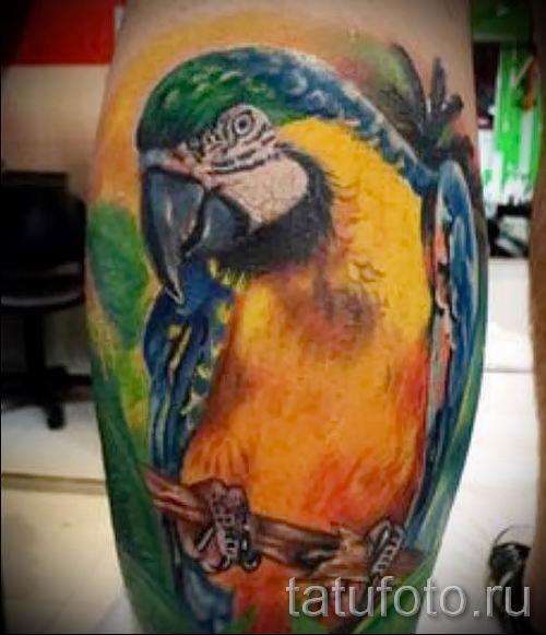 фото пример тату попугай для статьи про значение тату с попугаем - 30