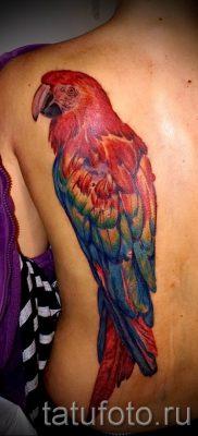 фото пример тату попугай для статьи про значение тату с попугаем – 33