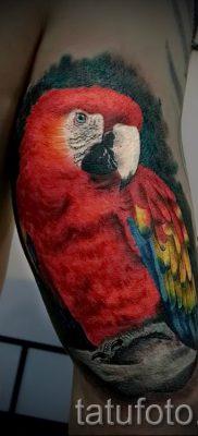 фото пример тату попугай для статьи про значение тату с попугаем – 37
