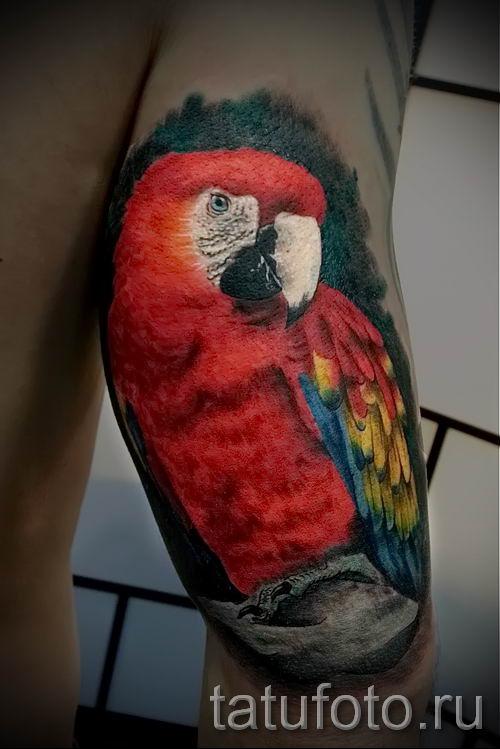 фото пример тату попугай для статьи про значение тату с попугаем - 37