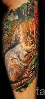 фото тату белка для статьи про значение татуировки с белкой – tatufoto.ru – 64