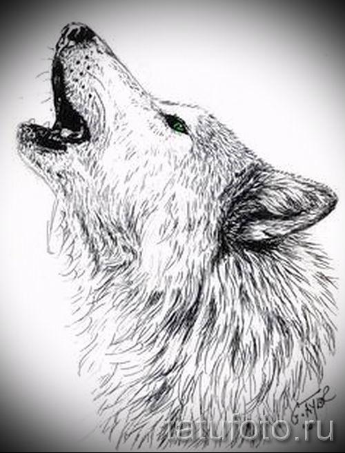 воющий волк. фото