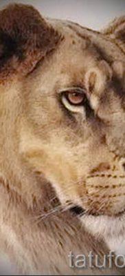фото тату львица для статьи про значение татуировки львица – tatufoto.ru – 13
