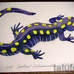 Оригинальный эскиз для татуировки саламандра – картинка для формирования задумки уникальной татуировки с саламандрой