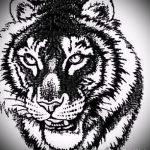 Оригинальный эскиз татуировки тату тигр (рисунки для татуировки с тигром) - вариант рисунка эскизы тату тигр (рисунки для татуировки с тигром) для разработки стильной идеи татуировки тигр