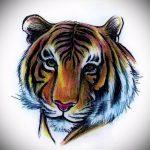 Интересны эскиз наколки тату тигр (рисунки для татуировки с тигром) - идея рисунка эскизы тату тигр (рисунки для татуировки с тигром) для создания эксклюзивной идеи татуировки тигр