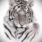 Интересны эскиз тату тату тигр (рисунки для татуировки с тигром) - идея рисунка эскизы тату тигр (рисунки для татуировки с тигром) для создания интересной идеи тату тигр