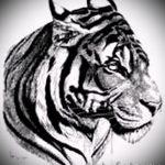 Прикольный эскиз татуировки тату тигр (рисунки для татуировки с тигром) - идея рисунка эскизы тату тигр (рисунки для татуировки с тигром) для разработки стильной идеи татуировки тигр