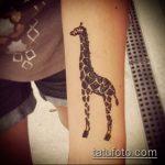 Прикольный пример нанесенной татуировки жираф – рисунок подойдет для тату жираф на акуле